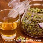Plantas Medicinales para Combatir la Bronquitis
